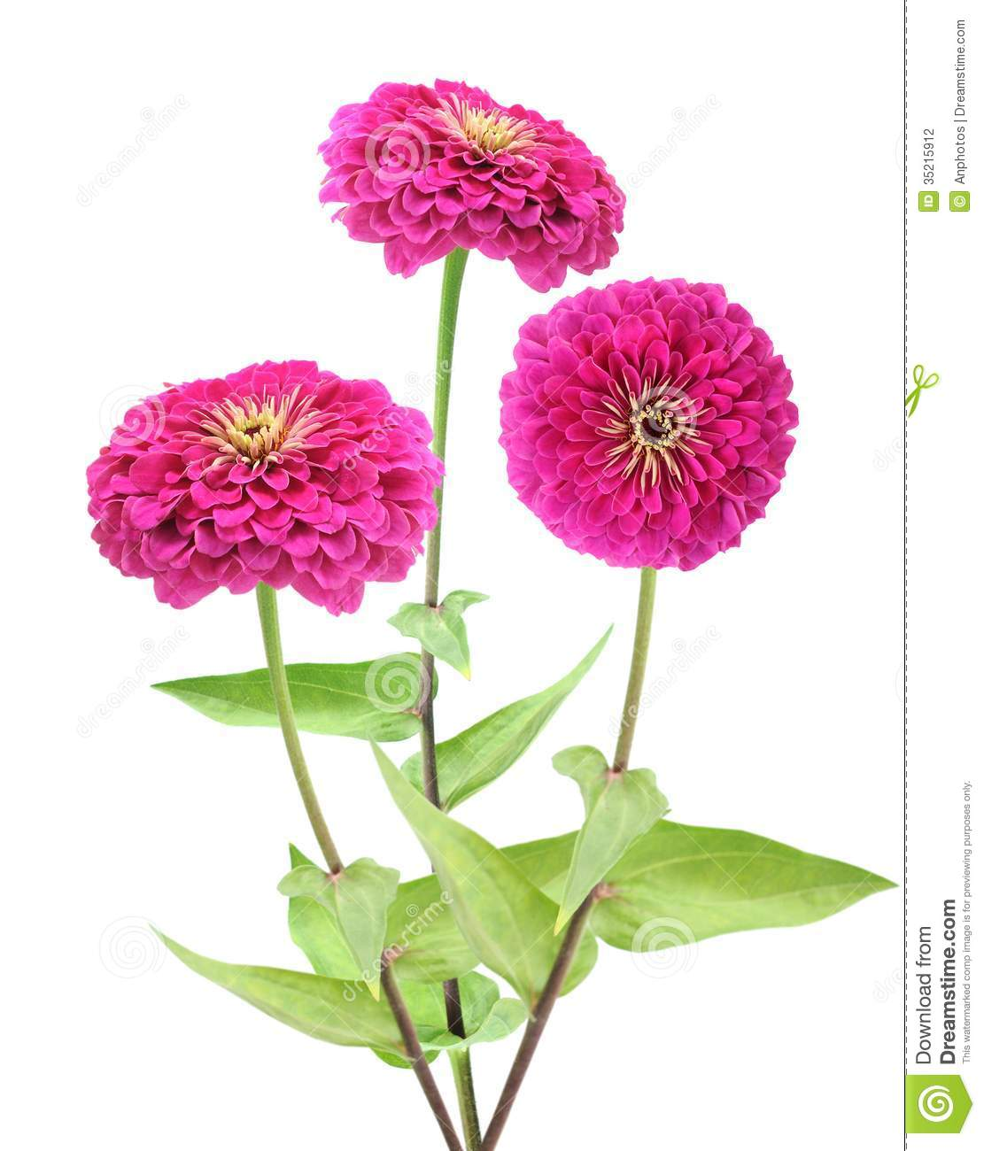 Zinnias clipart 20 free Cliparts | Download images on ...