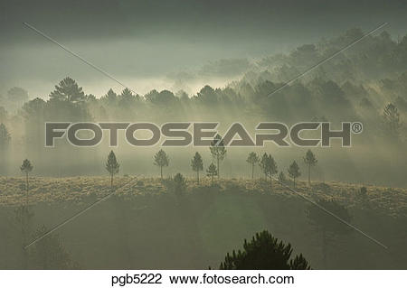 Stock Photo of Corsica. Early morning misty light through pine.
