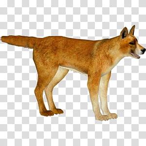 Singing, Dingo, Dog, New Guinea Singing Dog, Zoo Tycoon.