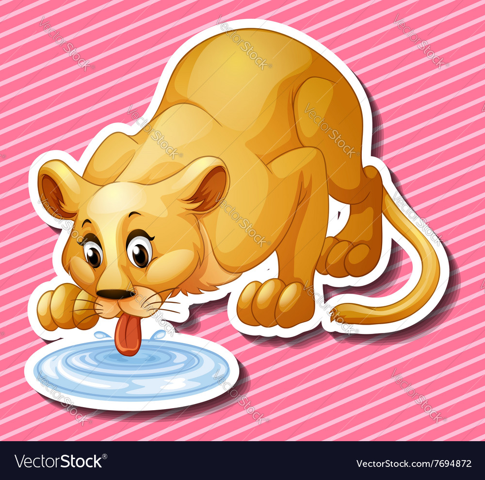 Showing post & media for Cartoon lion drinking water.