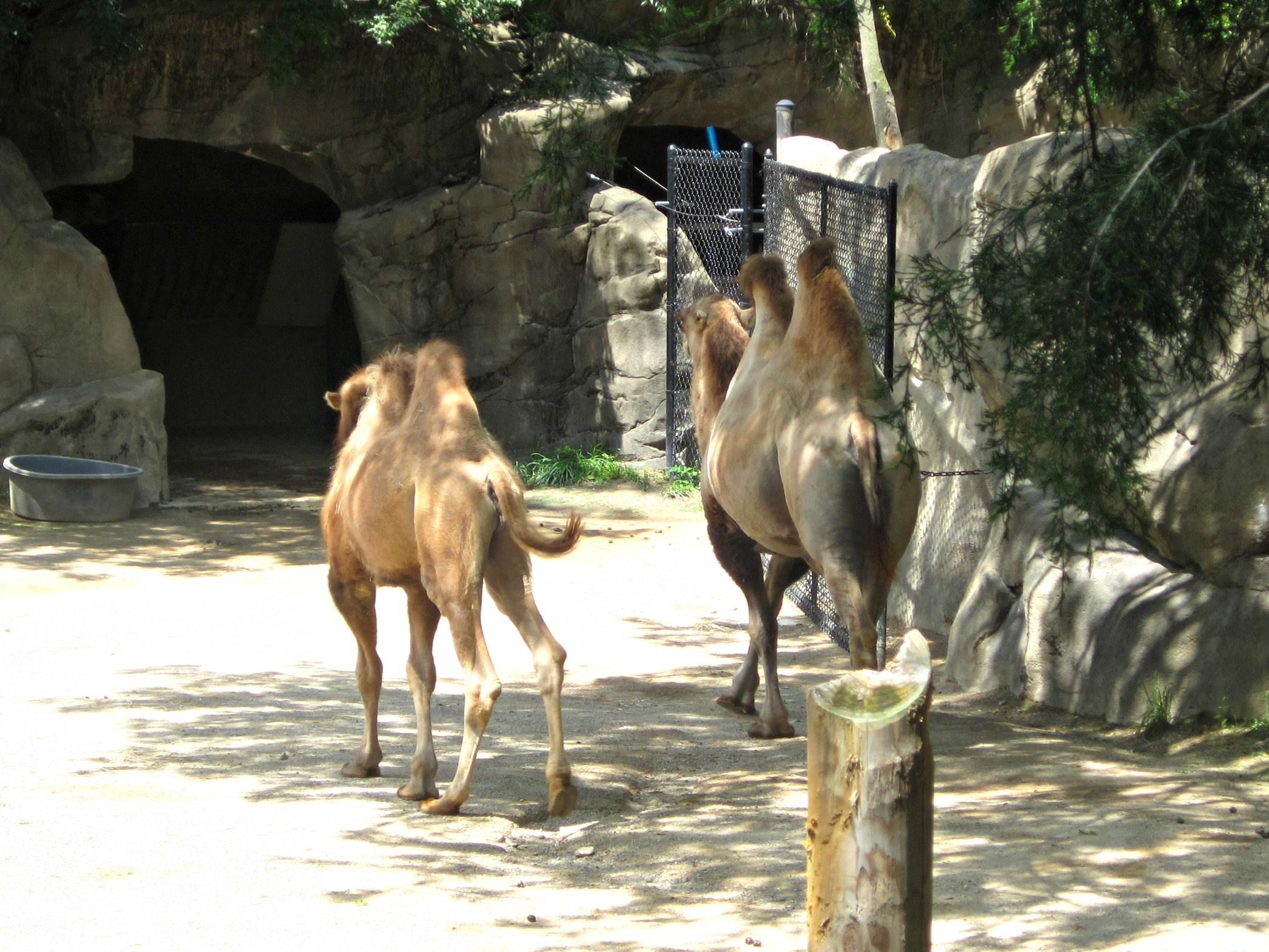 Cincinnati Zoo & Botanical Garden.