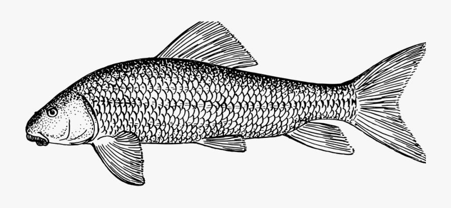 Fish, Animal, Biology, Ichthyology, Zoology.