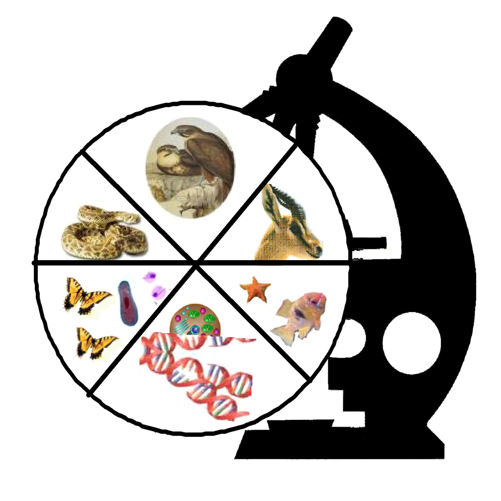 Free Zoology Cliparts, Download Free Clip Art, Free Clip Art.