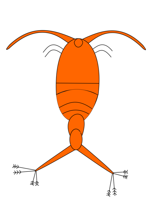 Zooplankton clipart » Clipart Station.