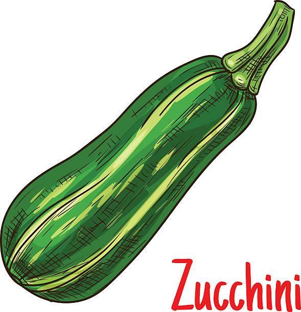 Zucchini clipart free 5 » Clipart Portal.