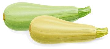 Zucchini Clipart.