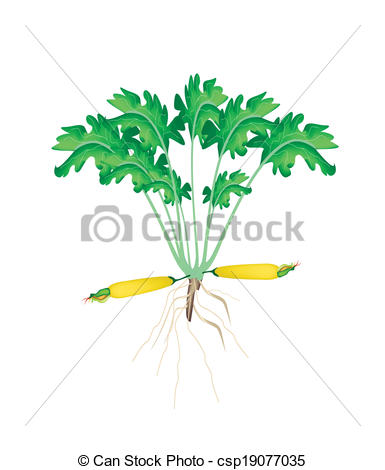 Related Keywords & Suggestions for Zucchini Plant Clip Art.