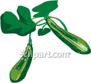 Zucchini Plant Royalty Free Clipart Picture.