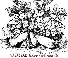 Zucchini Clipart and Illustration. 1,192 zucchini clip art vector.
