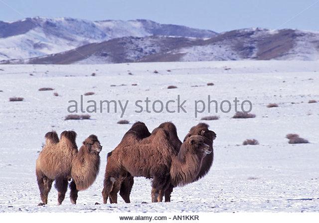 Mongolei Stock Photos & Mongolei Stock Images.