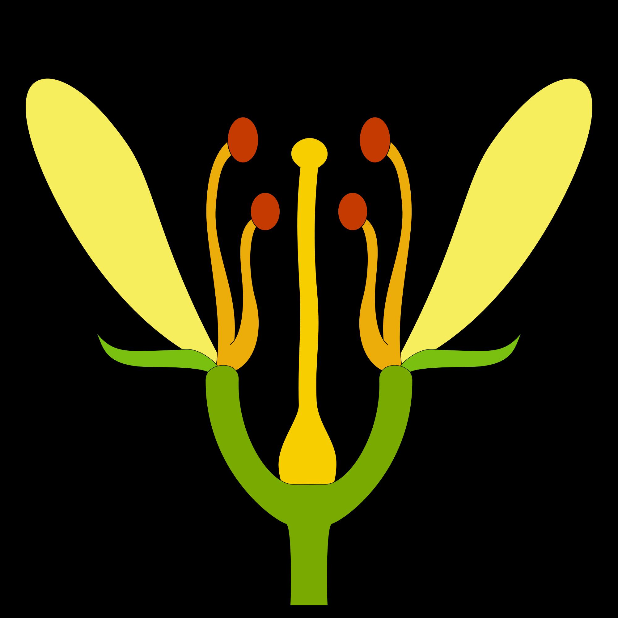 Blüte.