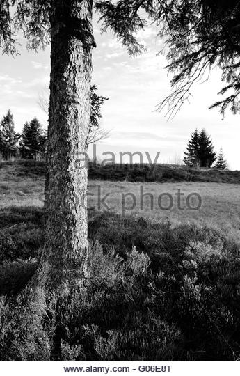 Bilberry Black and White Stock Photos & Images.
