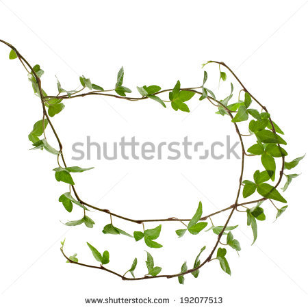 Plant creepers free stock photos download (6,329 Free stock photos.