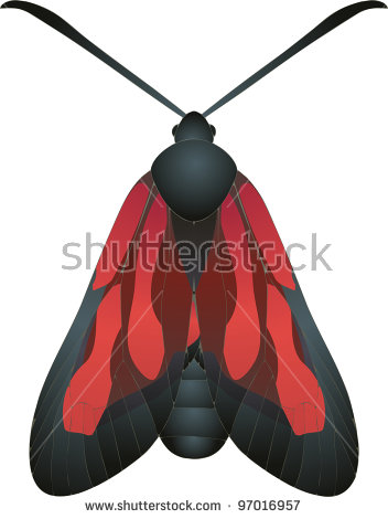Collection Butterflies Tyria Jacobaeae Cinnabar Moth Stock Vector.