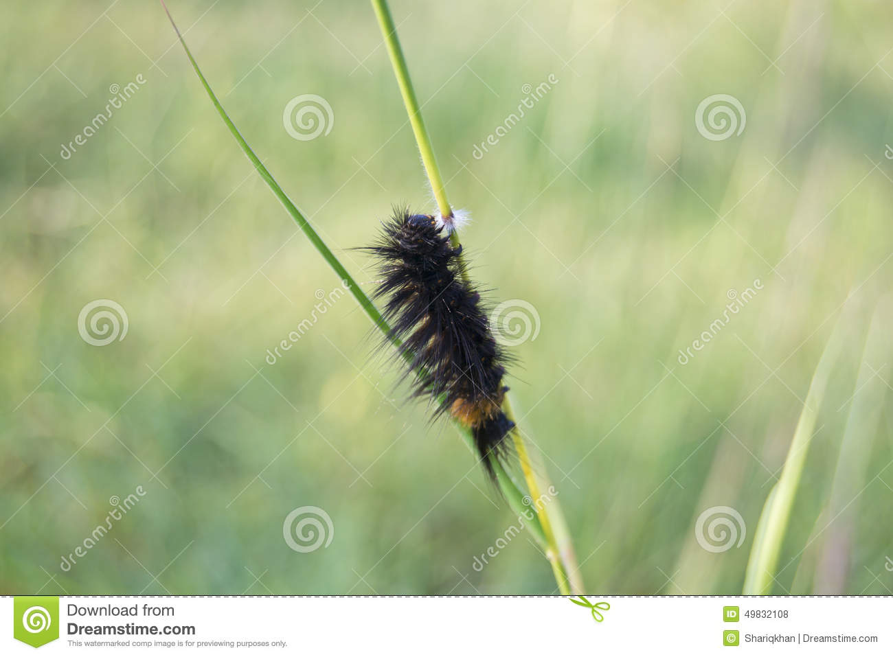 A Lot Of Grass Moths Stock Photo.