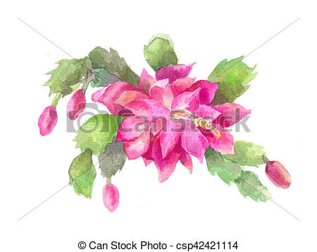 Clipart of Schlumbergera, Zygocactus or Christmas flower. Pink.