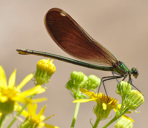 Want to know more about damselflies? This Article Will Tell You.