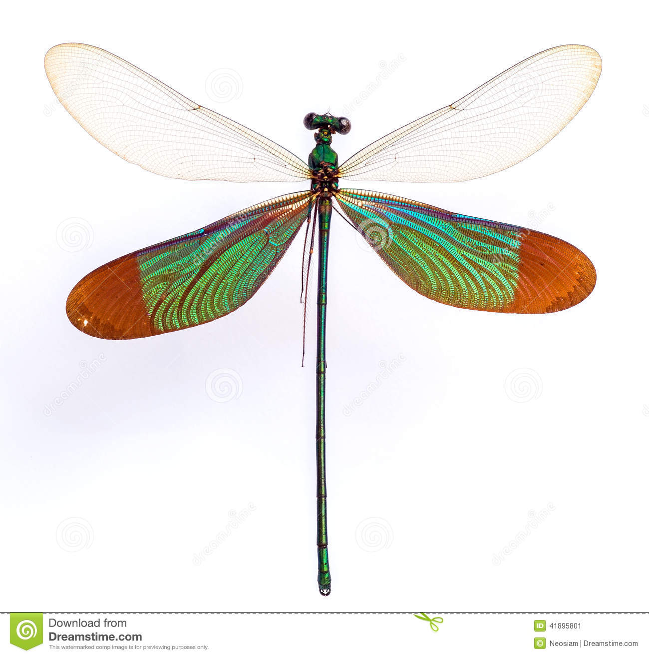 Zygoptera Stock Photo.