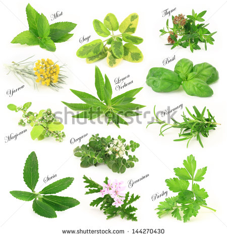 Herbs free stock photos download (279 Free stock photos) for.